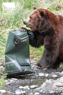 woodland park zoo bear affair 2013