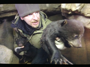 The moment I began to carefully lift three black bear cubs from their den to weigh and measure them. Courtesy of Mark Carroll / PBS Nature