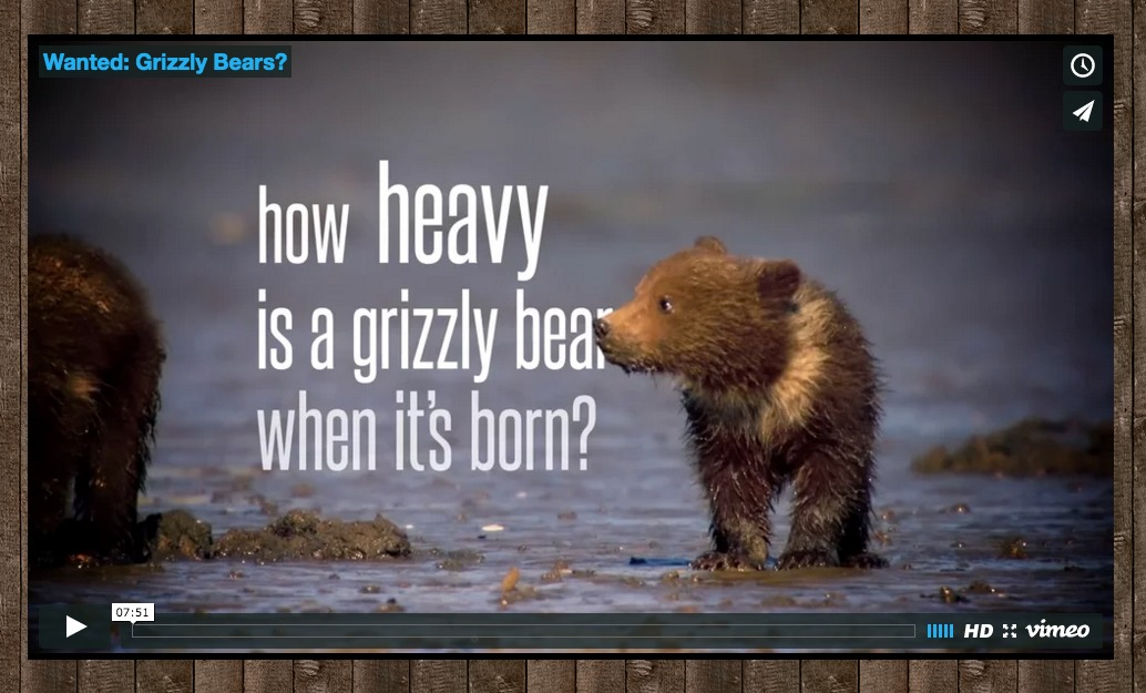 New grizzly bear film – released this week!